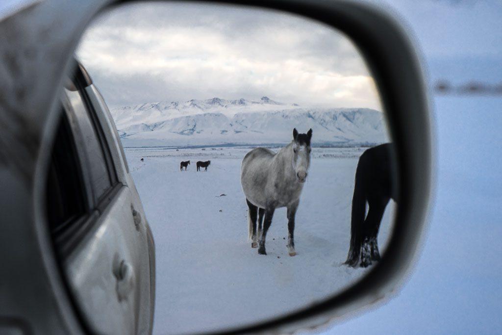 Kyrgyz horses in the snow