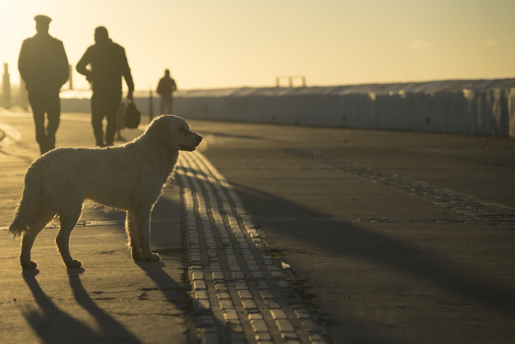 Street dog in Punta Arenas enjoying the morning sun