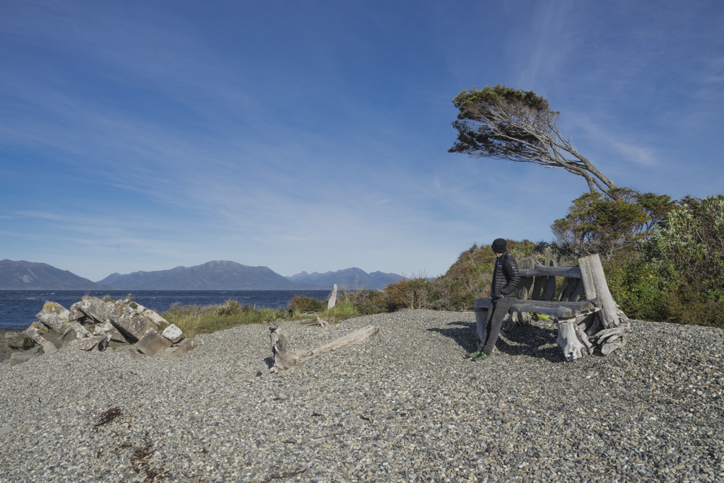 wind shaped tree at the Strait of Magellan